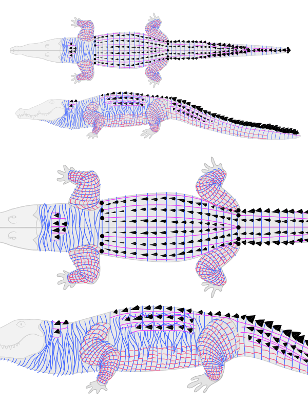 how to draw crocodile alligator scales pattern 5