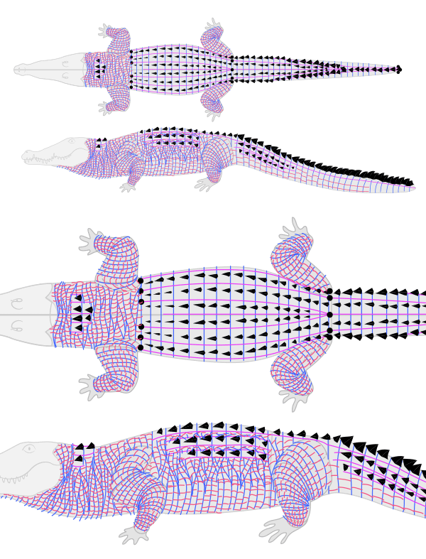 how to draw crocodile alligator scales pattern 6