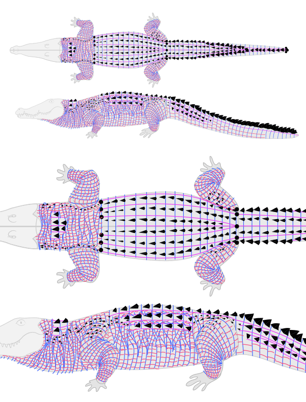 how to draw crocodile alligator scales pattern 7