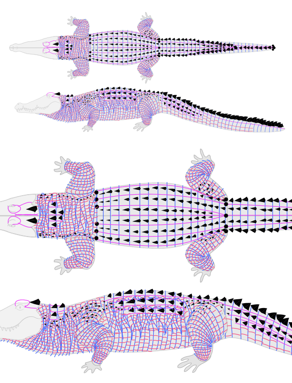 how to draw crocodile alligator scales pattern 8
