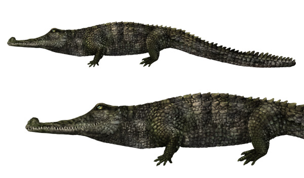 how to draw gharial gavial