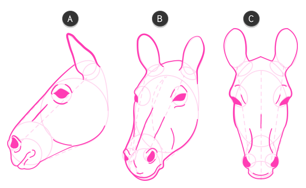 how to draw zebra head 4