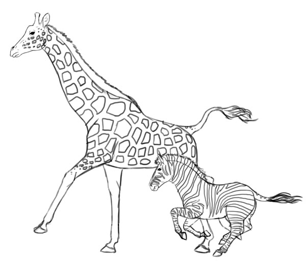 Line Drawing Zebra : Line drawing of giraffe pixshark images