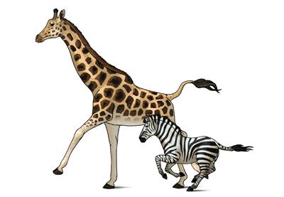 Draw zebra giraffe prev