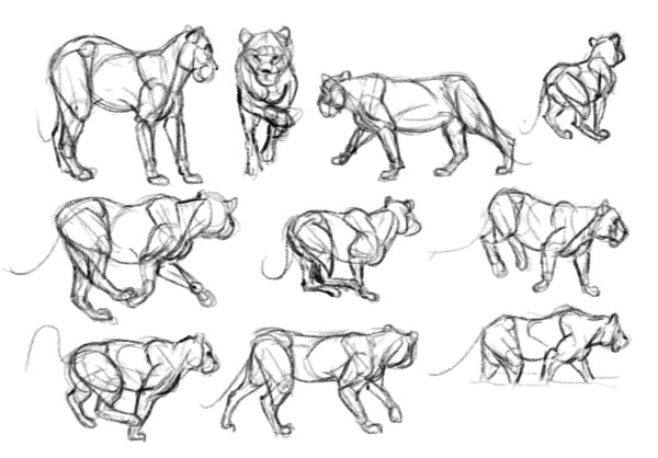 how to practice draw lion from imagination