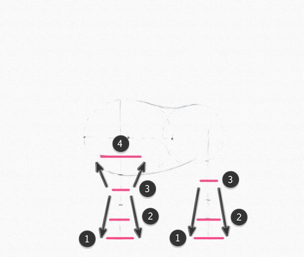 pony legs drawing width