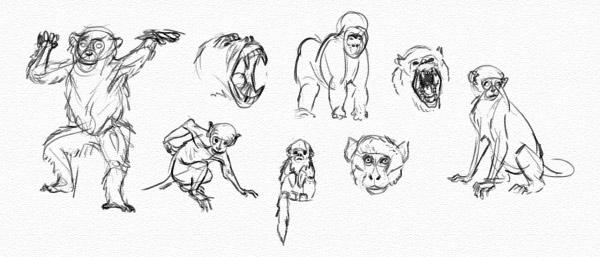 practice monkey details