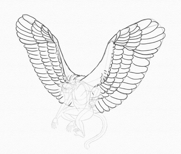 draw wings feathers secondaries