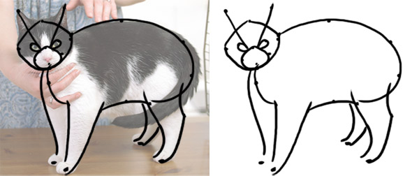 optical illusions how to draw cat from a reference
