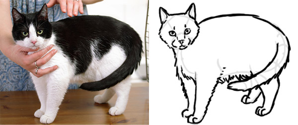 optical illusions how to draw cat from reference proportionally