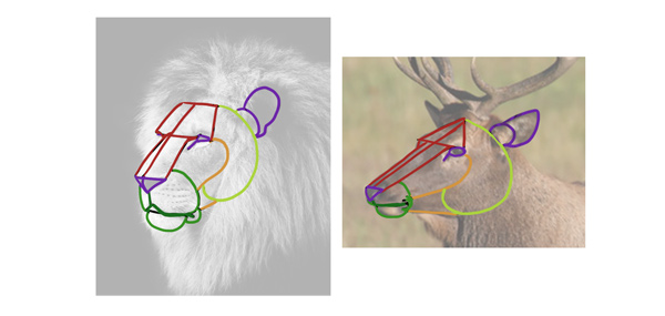 how to dreate animal head from imagination