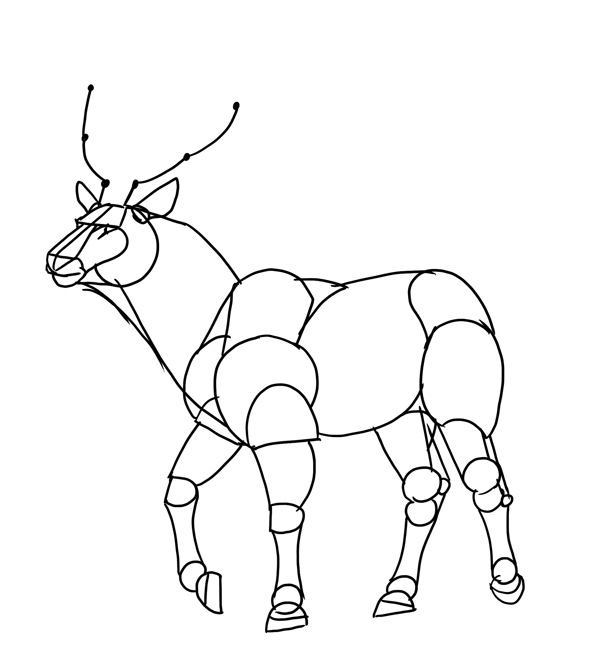 antlers partially drawn