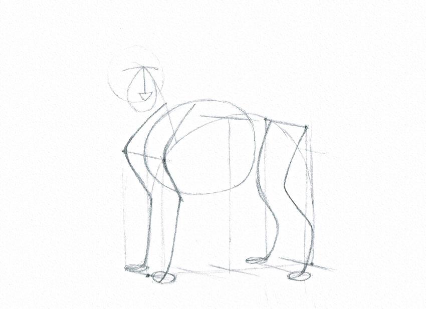 How to draw animal torso animal torso drawing