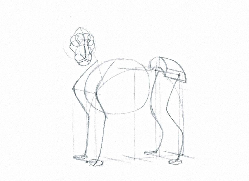lion face details drawing