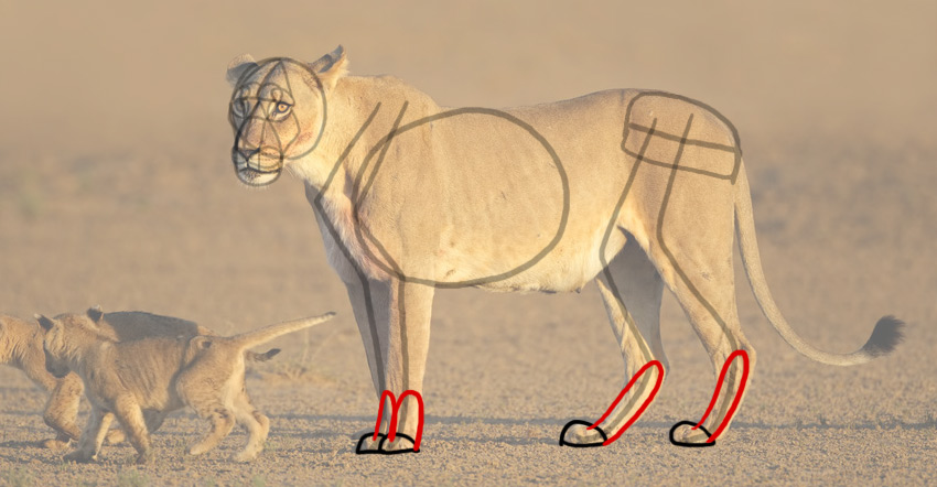 how to draw lion feet