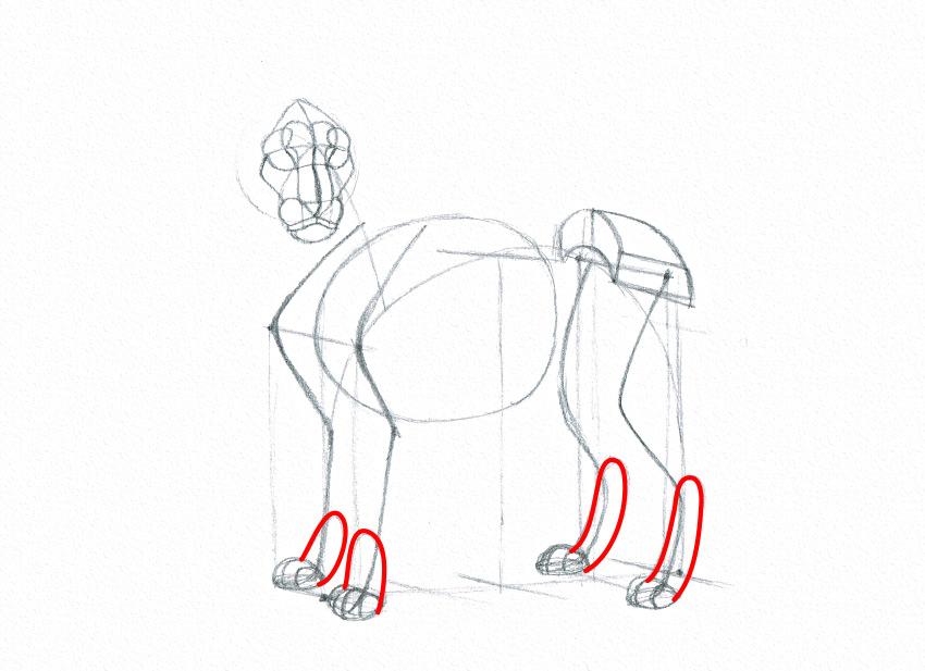 lion feet drawing