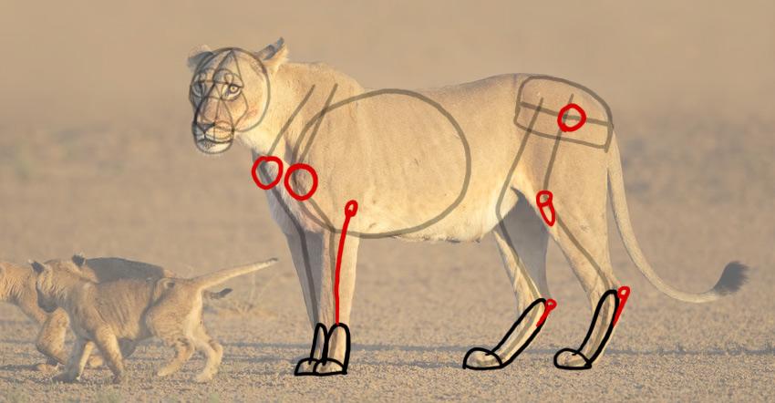 how to draw lion landmarks