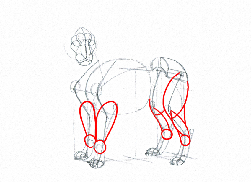 lion legs drawn