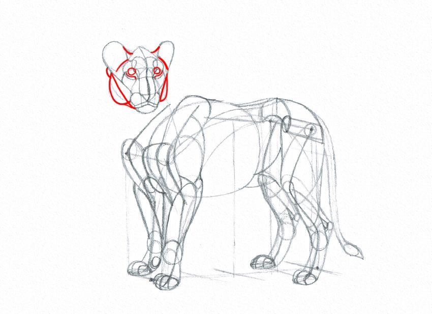 lion cheeks drawing