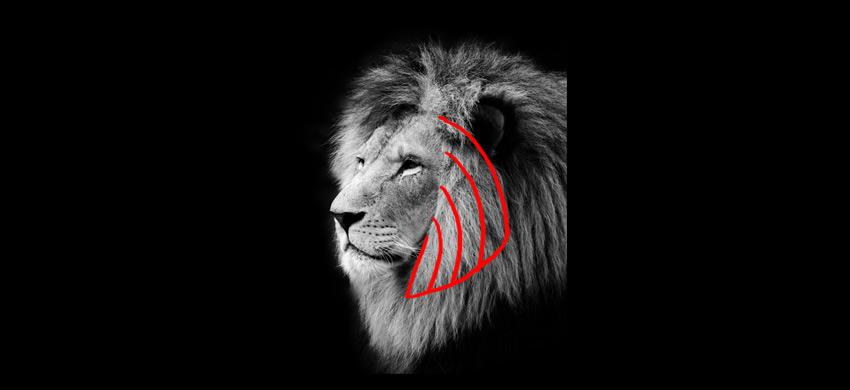 how to draw lion mane cheek