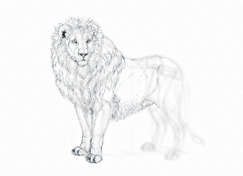 how to draw lion body