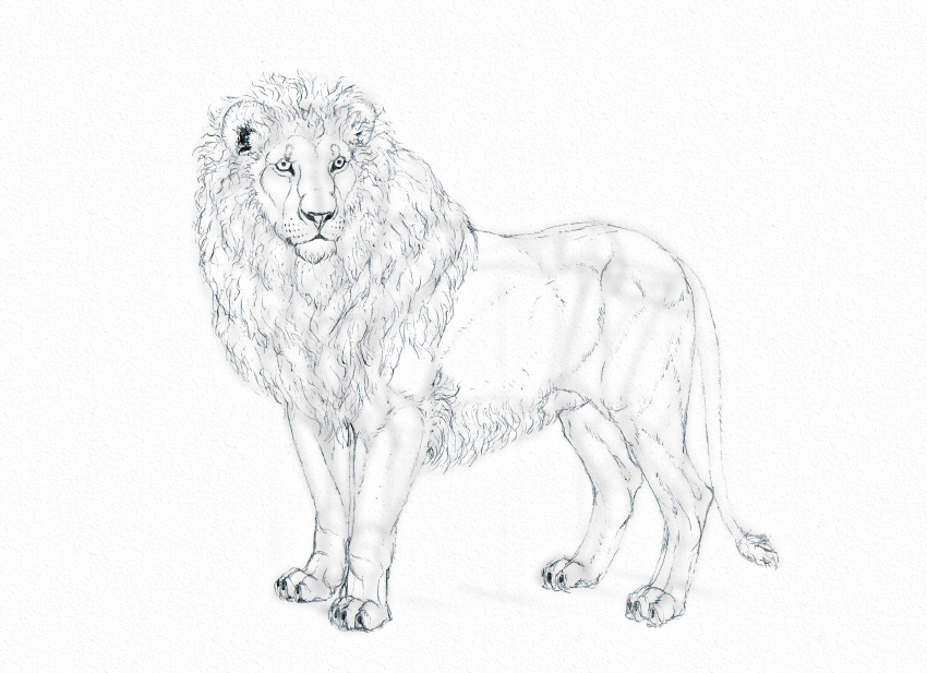 how to draw realistic lion