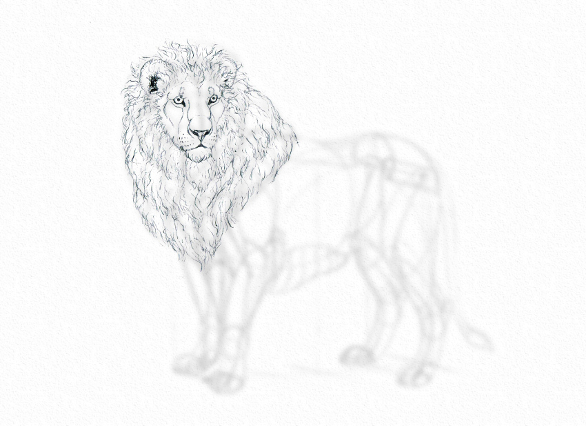 How to draw lion mane pencil