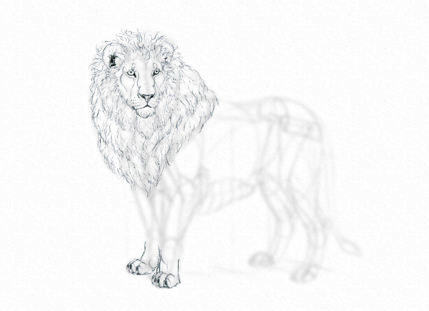 how to draw lion from a reference