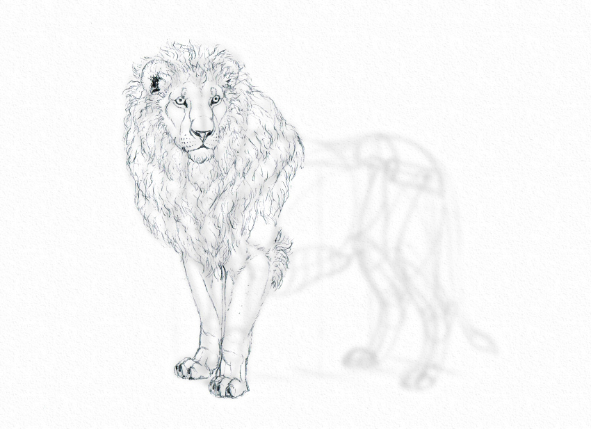 how to draw lion traditionally