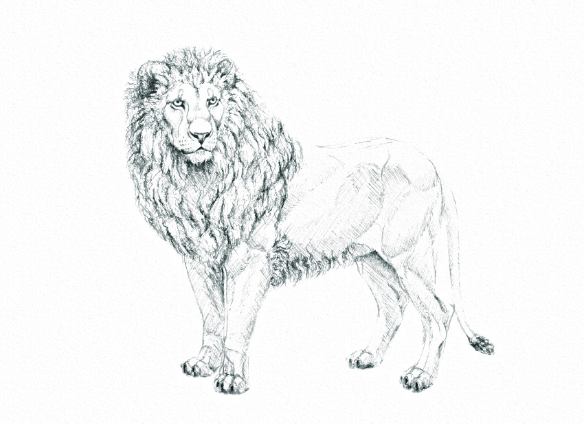 how to shade fur with one pencil