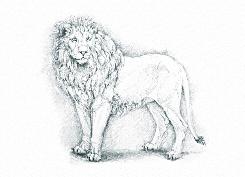 Animals With Pencil Outline Pictures
