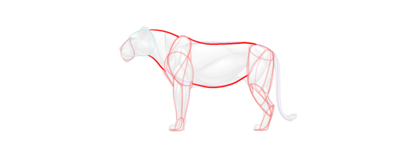 lion body simplified