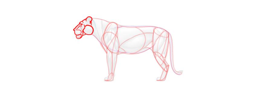 lion head simplified