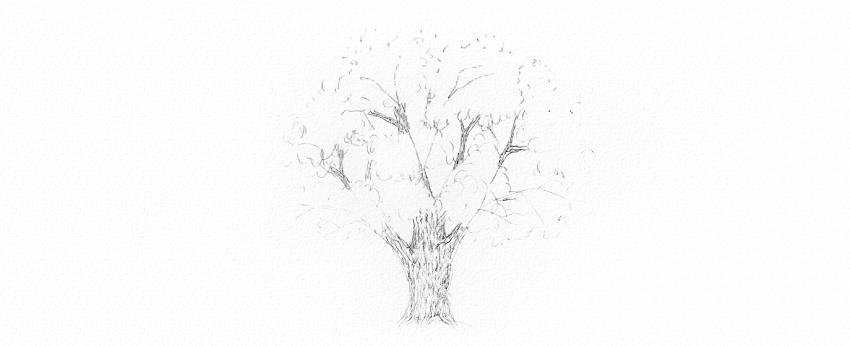 how to draw oak bark