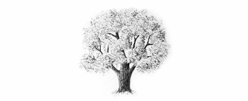 How To Draw Tree Leaves With Pencils