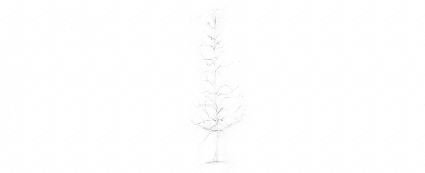 how to draw pine tree branches