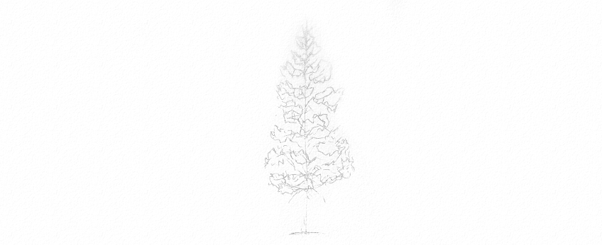 how to draw an evergreen tree