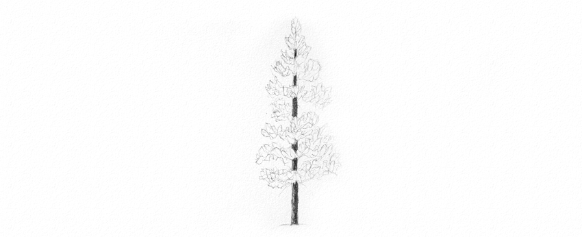 how to draw pine tree needles