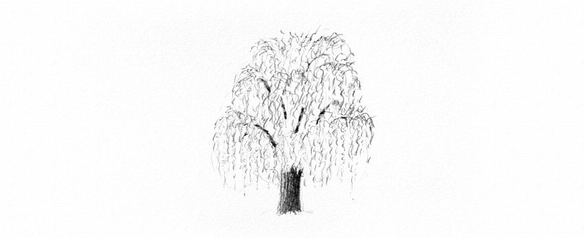 how to draw weeping willow trunk