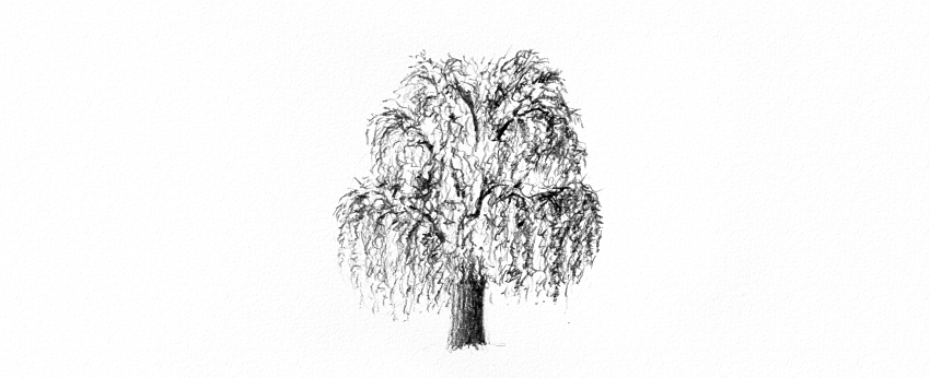 how to shade weeping willow leaves