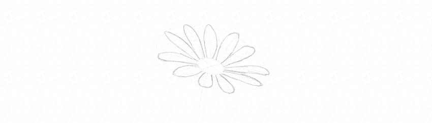 how to draw daisy finish petals horizontal