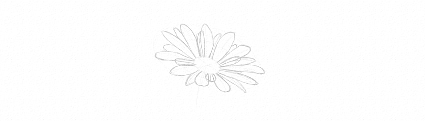 how to draw daisy small petals