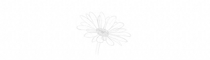 how to draw patter in the middle of daisy