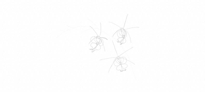 draw orchid inner petals