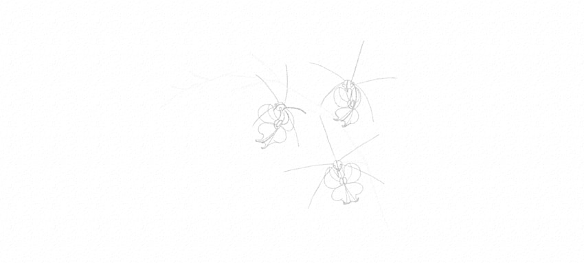 how to start drawing orchid flowers