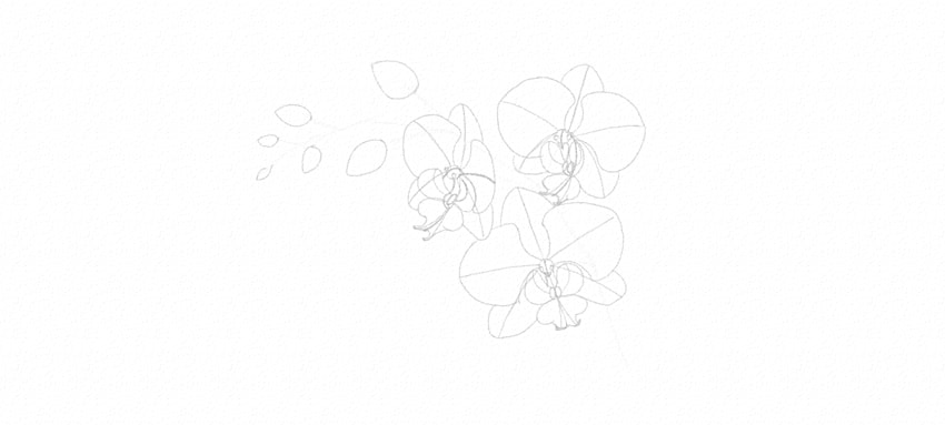 how to draw orchid buds