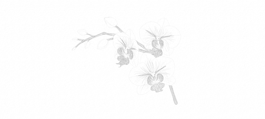 how to shade orchid petals