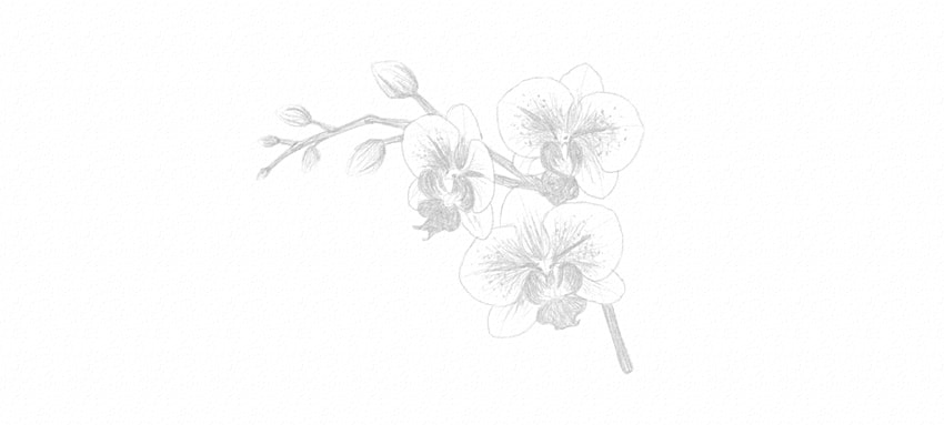 how to draw orchid pattern