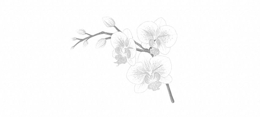how to darken orchid stem