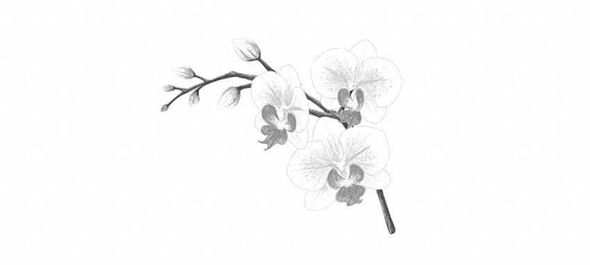 How to draw a flower how to adjust contrast orchid how to draw proper contrast mightylinksfo